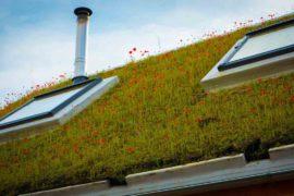 Du vert en hauteur sur les toitures et façades vertes